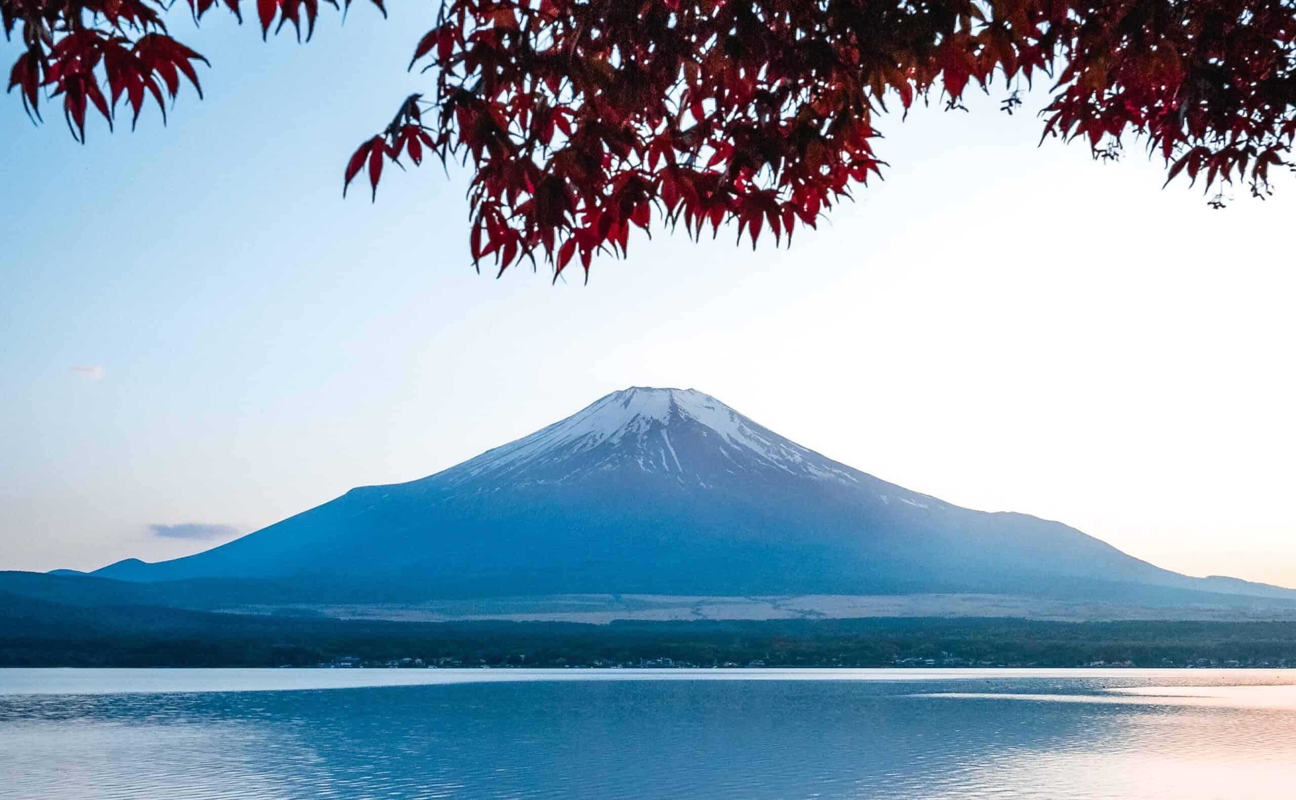 shamisen neo   shami-shop.com